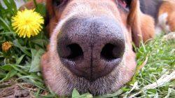 Você já pensou em usar aromaterapia no seu cãozinho?