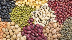 Fontes de Proteína Vegetal para Atletas e Pessoas Ativas