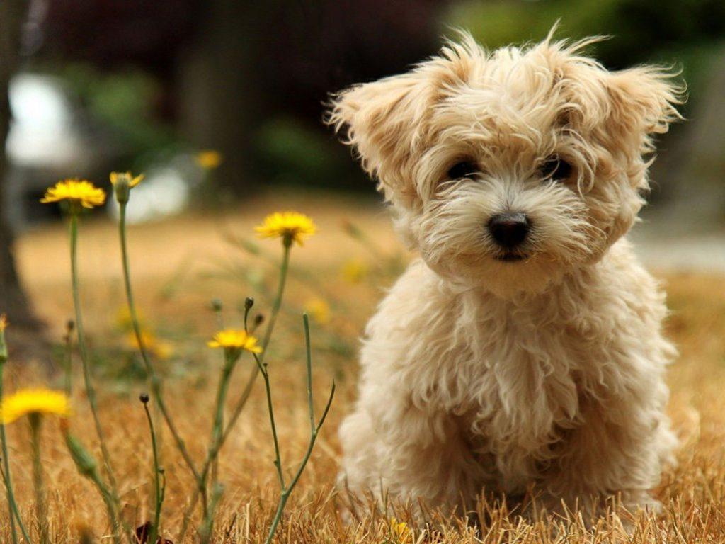 Homeopatia para animais de estimação.
