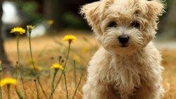 Homeopatia em Pets: O Que Você Precisa Saber